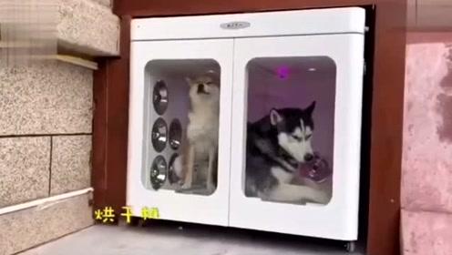 人不如狗系列,主人花三万5为爱犬别墅升级!