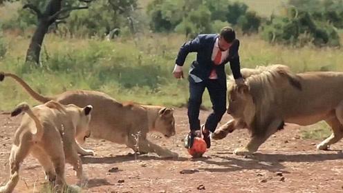 男子把足球踢向狮子,狮子会有什么反应?接下来的事情让人不敢相信!