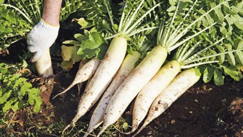 这3种萝卜切记不要买,种菜大爷从不吃,现在知道还不晚