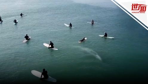 冲浪时与鲸鱼擦肩而过!无人机拍到巨大鱼影紧贴人群游过