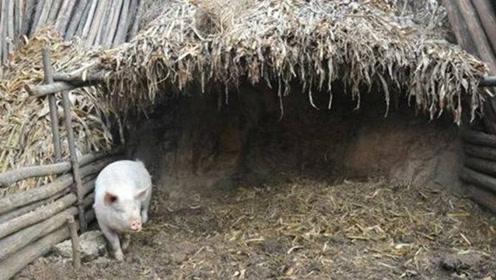 """农民砌猪圈挖出一条""""龙"""",不时发出怪声,上交后成镇馆之宝!"""