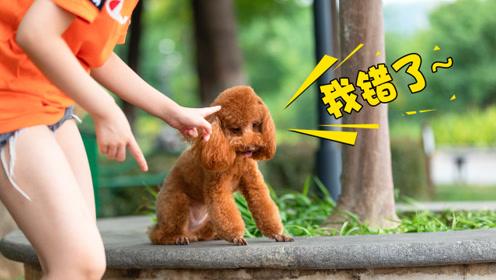 狗狗被骂后一脸反省的样子是真的吗?看完长知识了