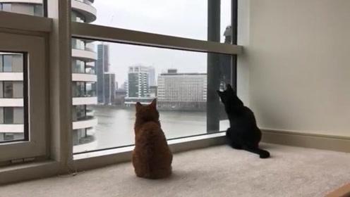 猫咪发现窗外有人在擦玻璃,接着搞笑的一幕发生了,太可爱了!