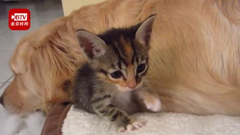 双十一猫粮超奶粉成进口商品第一 宠物用品或成消费新贵