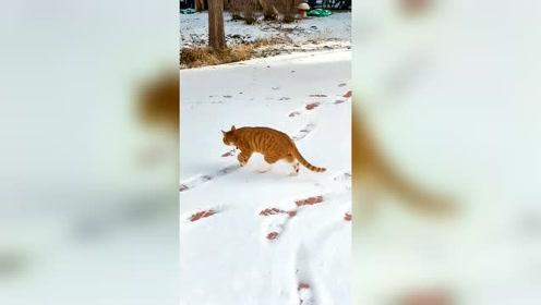 猫有四只脚只走出一个脚印,完美诠释了猫步