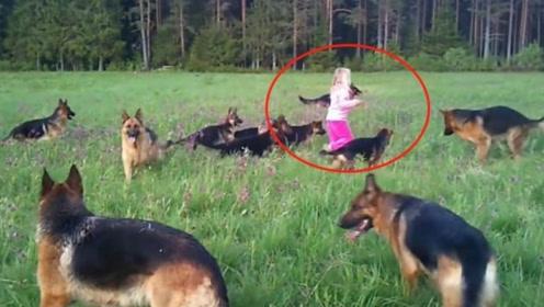 牧羊犬欺负野猪,忍无可忍之后,野猪叫来了十多个帮手