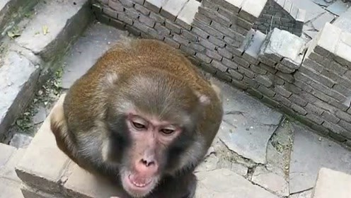 耍猴耍猴,主要的就是耍你没什么脾气,有能耐的话你可以来咬我啊!