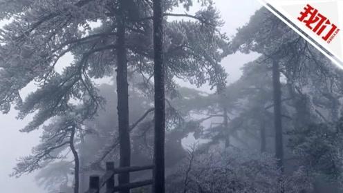 """安徽黄山迎来今冬首场雾凇景观 树木换上""""玉衣""""银装素裹"""