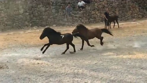 赛场上的马不是很聪明吗,怎么还直接往栏杆上撞,跟着屏幕都感觉疼!