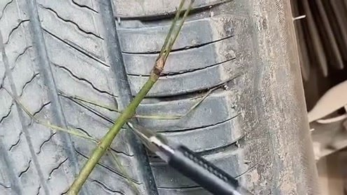 今天修车看到一个树枝,外观长得像蚂蚱,把我给吓了一跳!