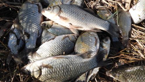 小伙看了一眼太阳 就知道今天的鱼群藏在哪里