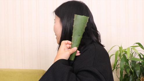 芦荟抹在头发上,神奇用途厉害了,很多男女都需要,后悔才知道