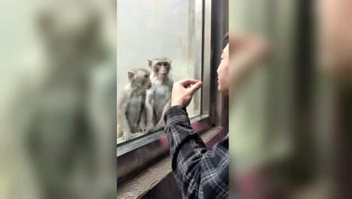 猴子气得想打人怎么搞!