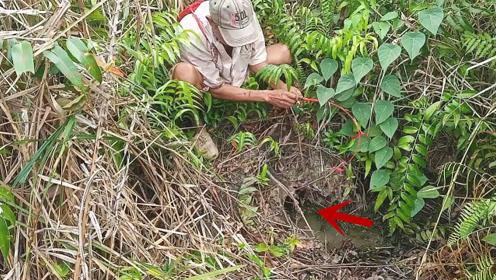 丛林中发现的小洞,老钓友将诱饵伸进去,转眼就拉出金色大家伙
