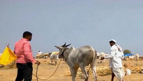 印度人既不吃猪肉也不吃牛肉,那会吃什么肉?中国游客不解