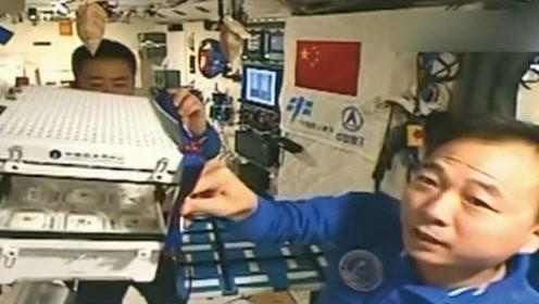 在太空种蔬菜,中国宇航员骄傲得竖起大拇指