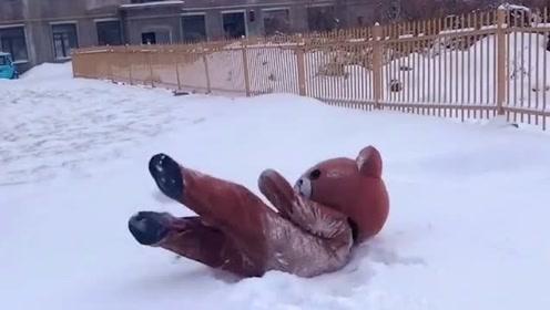 网红熊太潇洒了,传单不发在雪地上打滚,墙都不扶就服你