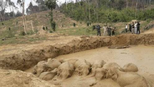 """村民发现田里的""""泥浆""""会动,走近一看,实在是令人心疼!"""