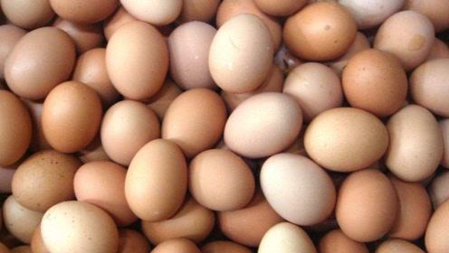 鸡蛋产业链产融结合将成趋势