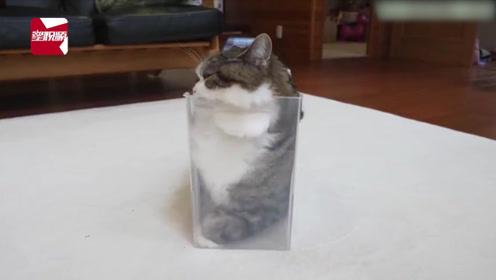 """猫是液体做的?猫咪是液体的又一力证,""""液化""""后的猫萌倒了万千网友"""