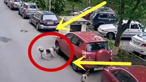 狗主人教唆狗狗去报仇,车主看到爱车那一秒,心都碎了!