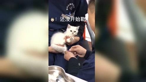 猫:打针太可怕了!