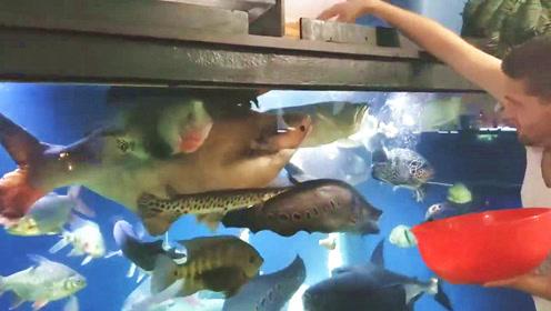 邻家土豪的日常生活,每天精心喂养一大缸宝贝鱼,太令人羡慕了