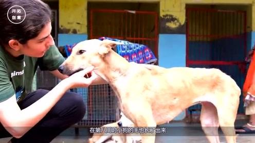 可怜的狗狗遗弃,饿的只剩下一副骨架,2个月后让主人赚大了