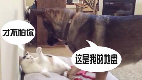 """狗子""""欺负""""新来的猫咪,结果猫咪突然逃走,狗猫还玩起了捉迷藏"""
