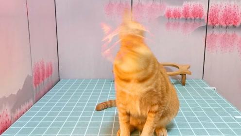 吸吸:这只橘猫明明超可爱却过分沙雕,画面过于鬼畜,慎点