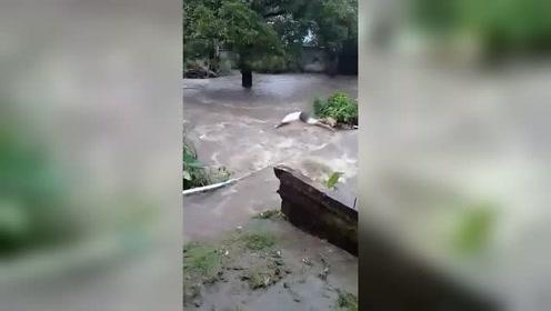 狗狗不慎掉入湍急的洪流 主人毫不犹豫跳进水里把它捞了上来