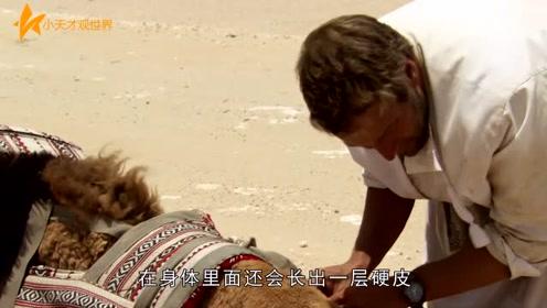 在沙漠中渴死的骆驼,人为什么不能碰?会有可怕的事发生!