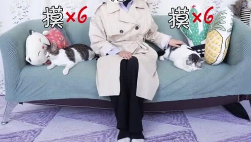 家里有两只小猫咪的,一定要拿捏好分寸,注意言辞!
