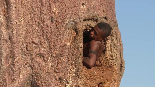 """非洲最神奇""""万能树"""",不仅可以提供吃喝,还能当房子住!"""