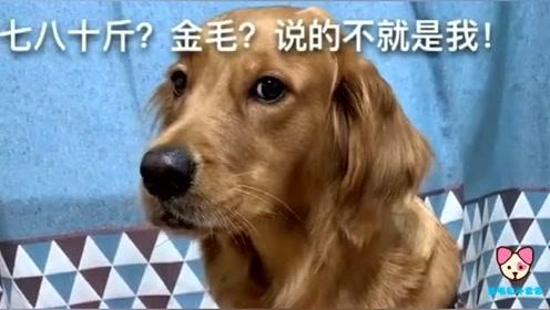 主人给狗肉馆打电话,狗狗以为自己要被卖了,吓得不敢说话