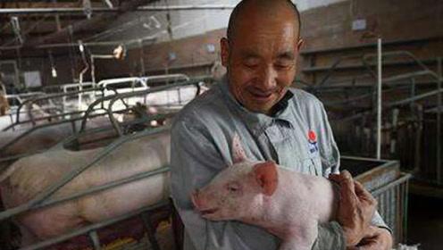 """11月底猪肉""""新政策""""!高价迎来""""新格局""""!6省或将""""脱节""""?"""