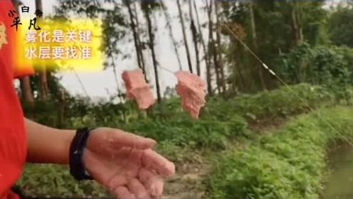 鲢鳙不好钓,那是你的方法不对,钓鱼高手教你走杆鲢鳙钓法