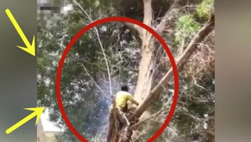 工人伐木发生意外,当场失去生命,监控拍下死亡的全过程!