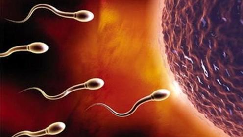 精子能在女性体内存活多久?没着床成功的精子去哪了?答案难以置信