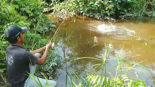 深山水坑边野钓,中鱼速度真快,这吃钩大货太真有劲了!
