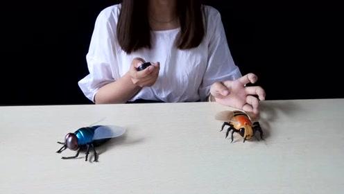 开箱一只超大号绿豆蝇,我们叫这个叫绿豆蝇也叫屎苍蝇,你们那?