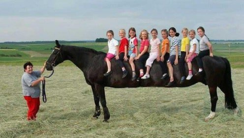 世界上最大的马,身高足足有3米,一匹马身上能坐10个人