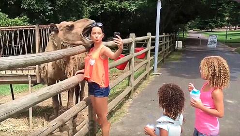 游客正要和骆驼合影,结果发生意外,头皮差点被啃掉!