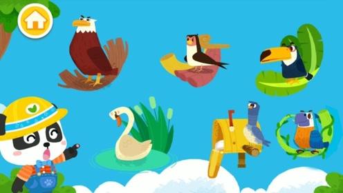 小熊猫出门遇见可爱啄木鸟,还遇见老鹰欺负天鹅,结果却反转!