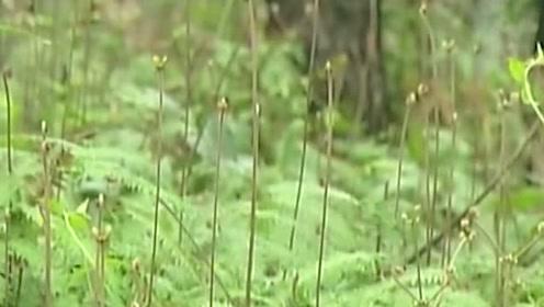 中国菌草技术推广至中非国家,带动当地减贫致富