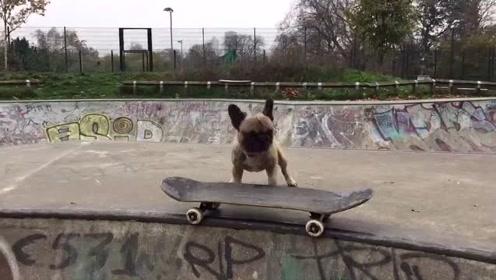 不去上学可惜了!这个狗子也太聪明了吧!这是谁教的?
