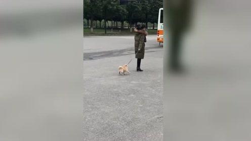 这是我见过最敷衍的遛狗,狗子:求求你看看我