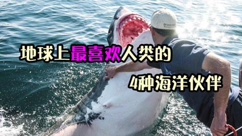 奋勇赶走大鲨鱼,池底勇救潜水员,4大最喜欢人类的海洋伙伴!