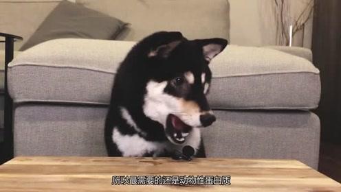 这狗子吃着世界上最好的爱心餐,铲屎官快来学习,你的狗子也要有