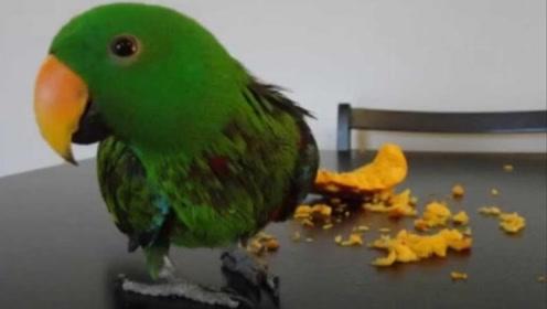 老外喂鹦鹉吃一块南瓜,下一秒请憋住别笑,镜头拍下搞笑全过程
